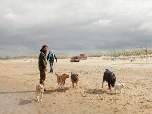 Massage voor de hond door Chris Stuart bij Dog Livity, Den Haag