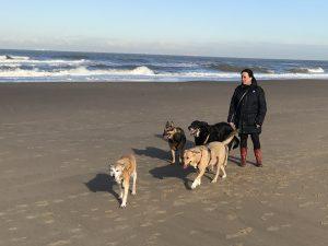 Gedragsbegeleiding voor de hond door Denise Vrolijk bij Dog Livity